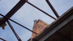 Tauben sitzen auf dem Schornstein der ehemaligen Schokofabrik. Foto: Philine Schlick