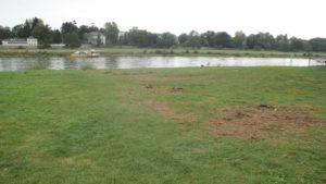 Die zerpflückte Grasnarbe gibt Rätsel auf. Foto: Philine Schlick