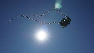 Star unter den Fliegern: der Riesenrochen des Dräsdners. Foto: Elisabeth Renneberg