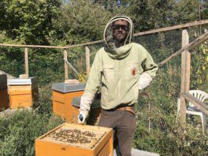Bienenhaltung in der Johannstadt mit Mehrwert für den Stadtteil Foto: Anja Hilgert