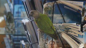 Die Reisekataloge 2020 werden von Meister Joda fachmännisch zerlegt. Foto: Philine Schlick